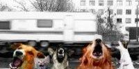 chien-caravane